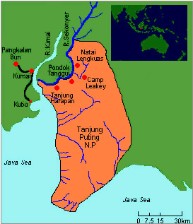 tanjung puting map